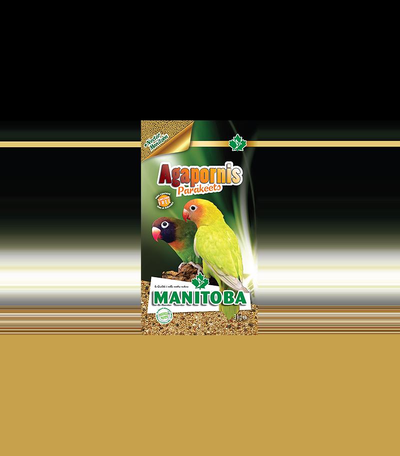 Manitoba Agapornis Parakeets -...