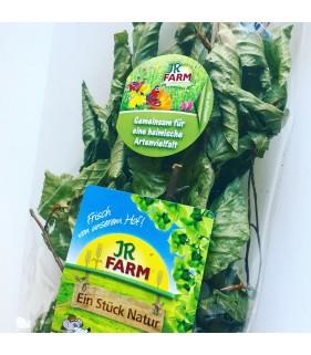 JR Farm Rami di Faggio 40 g