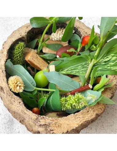 Guscio di noce brasiliana per foraging